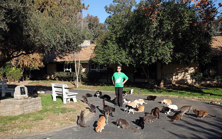 Ежегодно женщина тратит 1,6 млн долларов на содержание тысячи своих котов