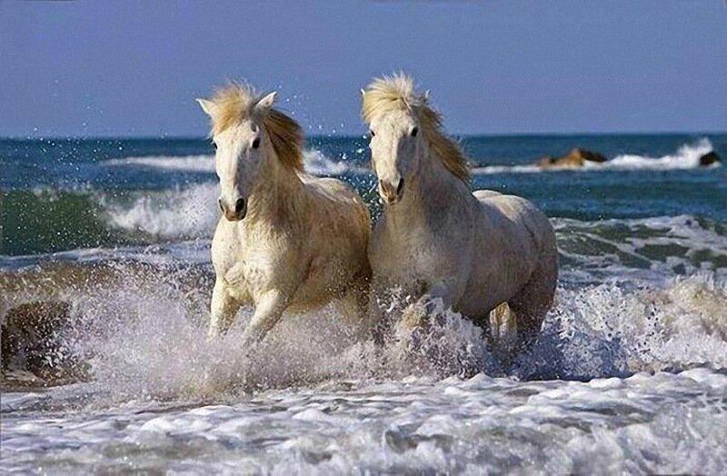 Самые самые лошади в Книге рекордов Гиннеса