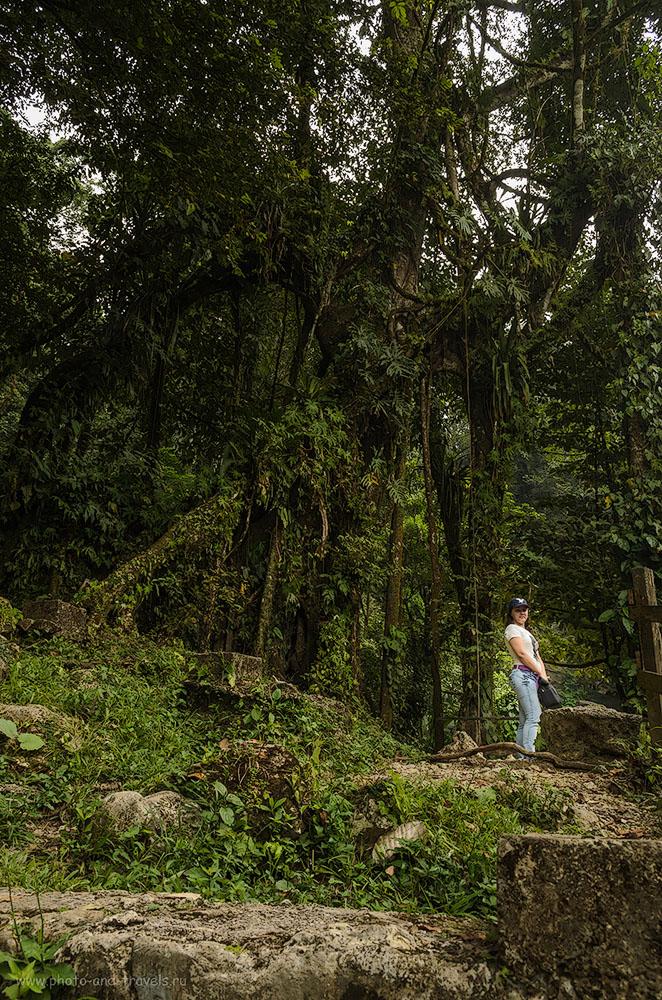 8. Джунгли у водопада Мисоль-Ха в Мексике. Самостоятельный тур по стране на арендованной машине. Куда поехать отдохнуть из Екатеринбурга?