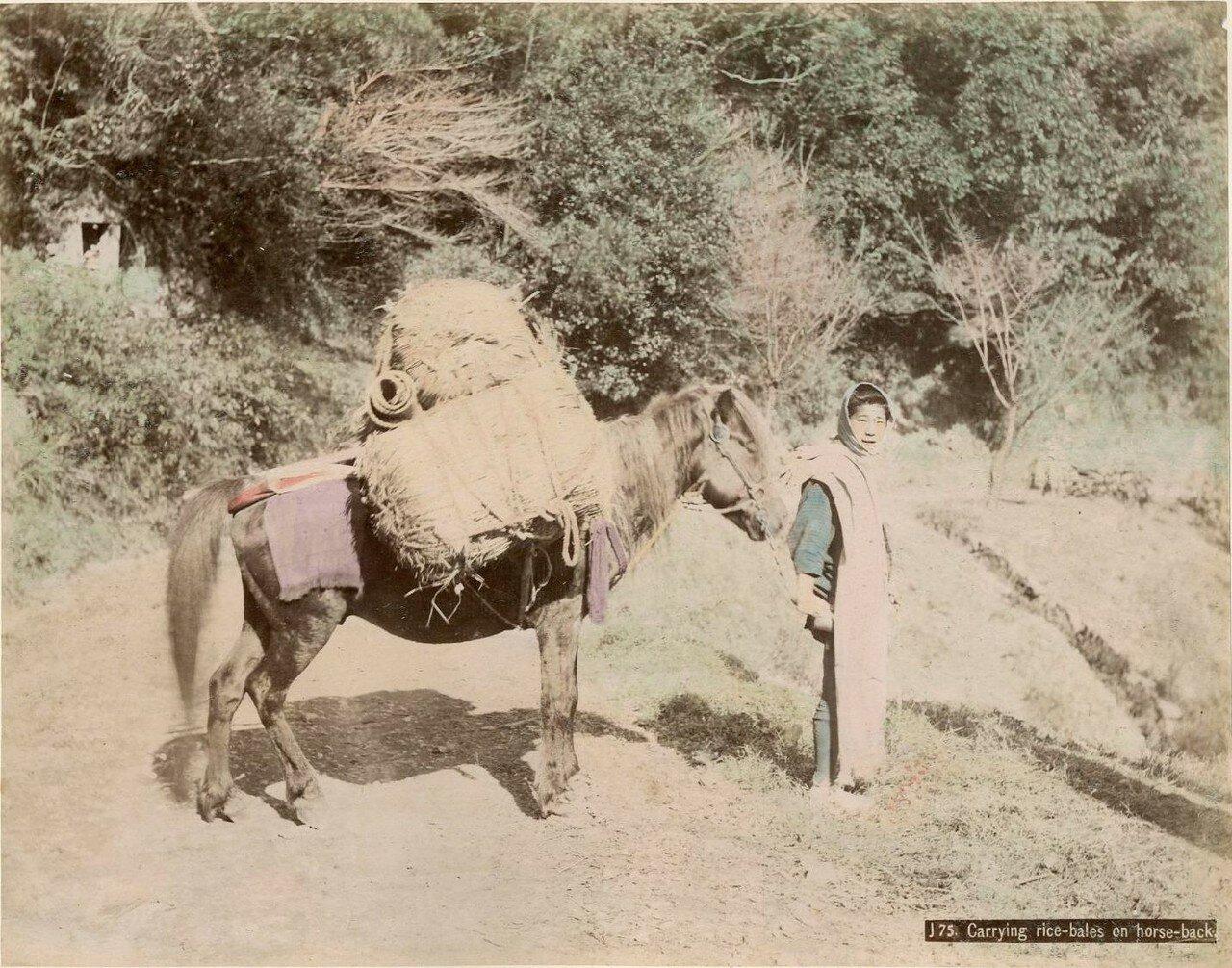 Груженный тюками с рисом мул