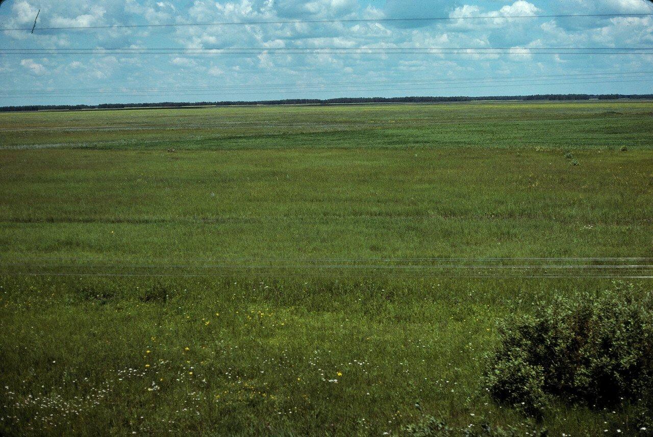 Барабинская степь