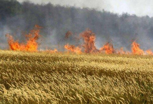 На юге Молдовы высокая пожароопасность: сгорело 12 га ячменя