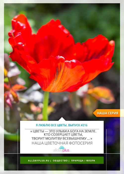 Я люблю все цветы, выпуск 216.
