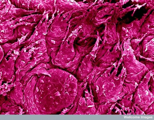 Повседневные вещи под микроскопом. Часть 2