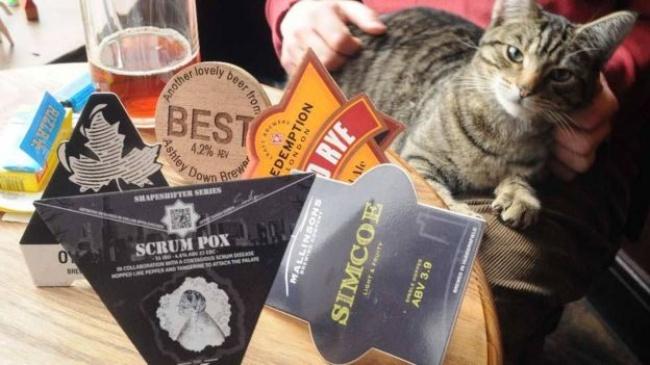 Вэтом британском пабе есть все для уютного вечера: пивои... кошки