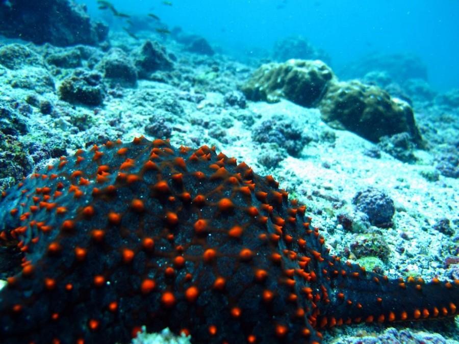 10. Звезды могут менять пол Морские звезды способны без труда менять пол, после чего переключаться о