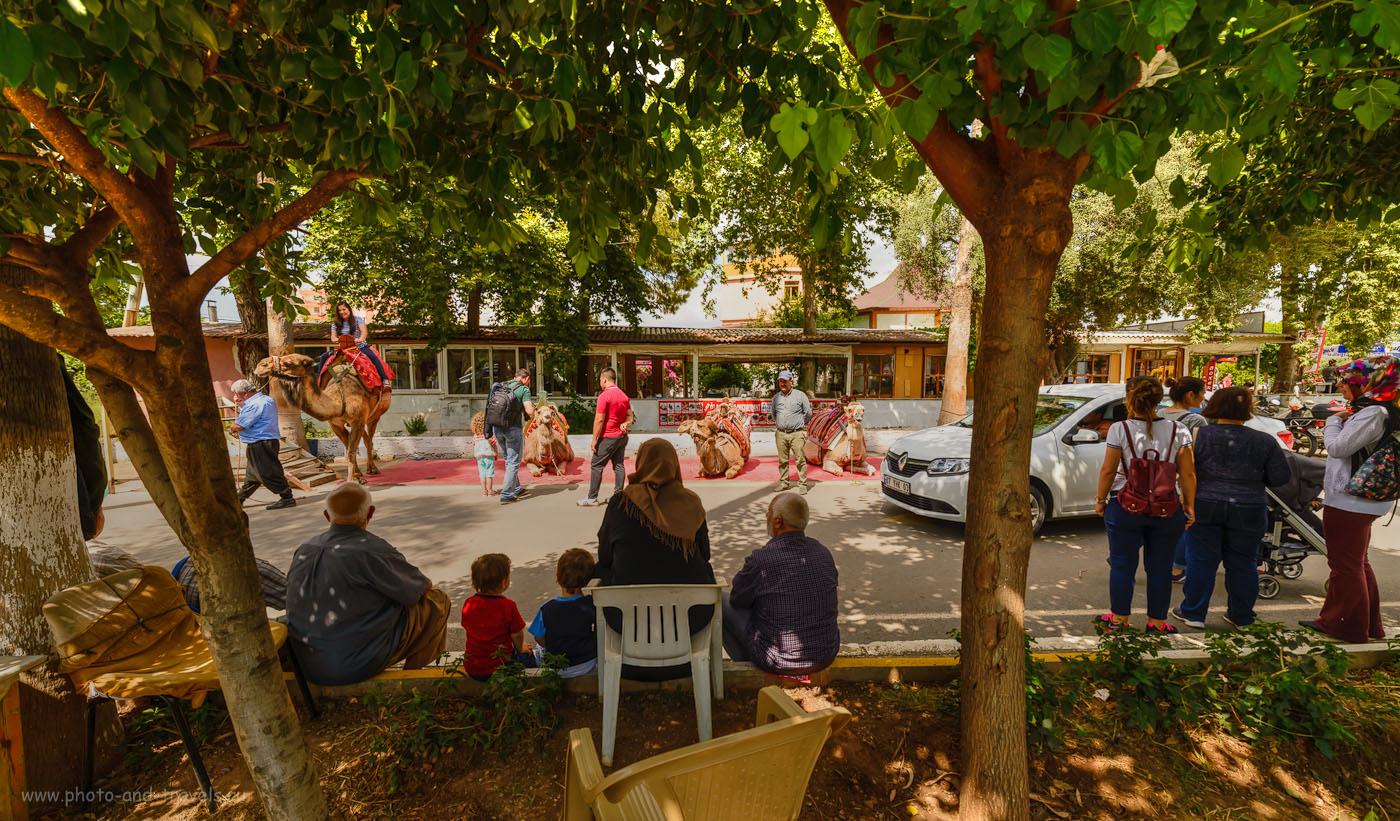 Фотография 18. Прокат верблюдов у входа в парк Верхний Дюден в Анталии. Интересные места, куда можно поехать на экскурсию после пляжного отдыха. Отзывы туристов об отдыхе в Турции. Тонмаппинг.