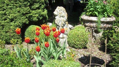 лев в тюльпанах в Ботаническом саду ТвГУ.jpg