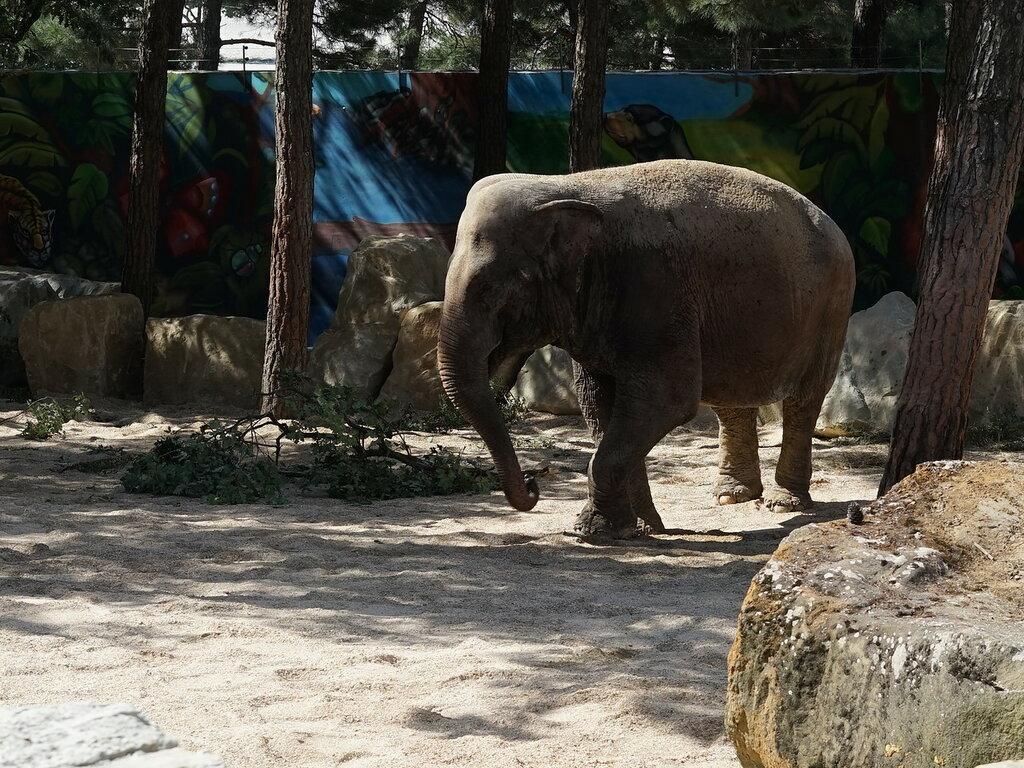 Слон в зоопарке. Сафари-парк, Геленджик.
