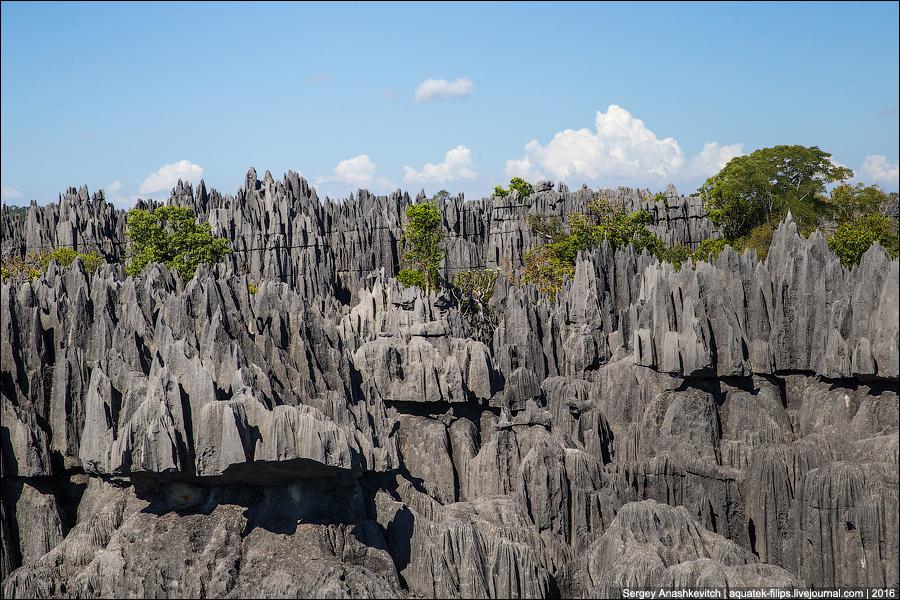 Цинги-де-Бемараха / Tsingy de Bemaraha