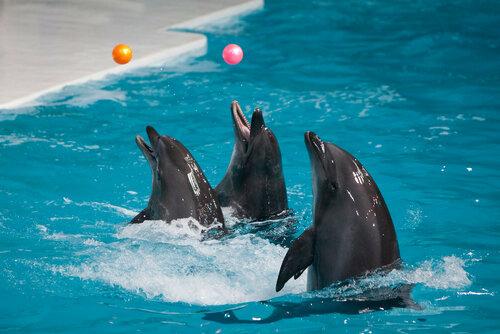 В Кишиневе протестуют против открытия дельфинария