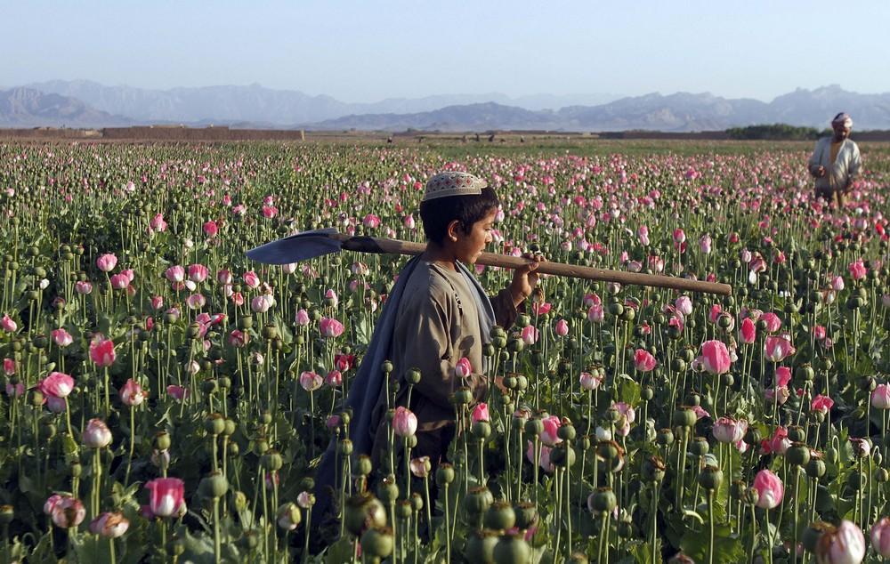 APphoto_APTOPIX Afghanistan Opium