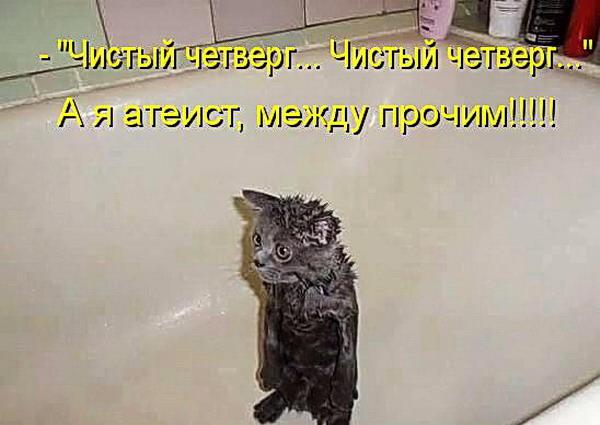 Картинки с Надписью Кошки