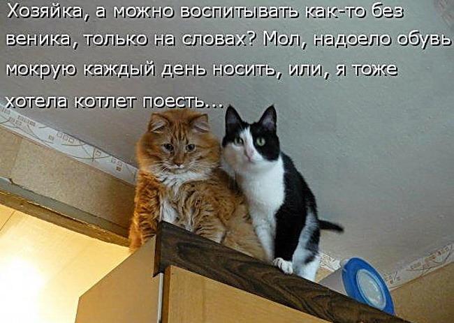 Животные Фото Картинки с Надписью