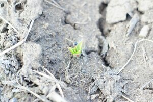 Весна идет весне дорогу - Страница 31 0_1390ea_91cb6850_M