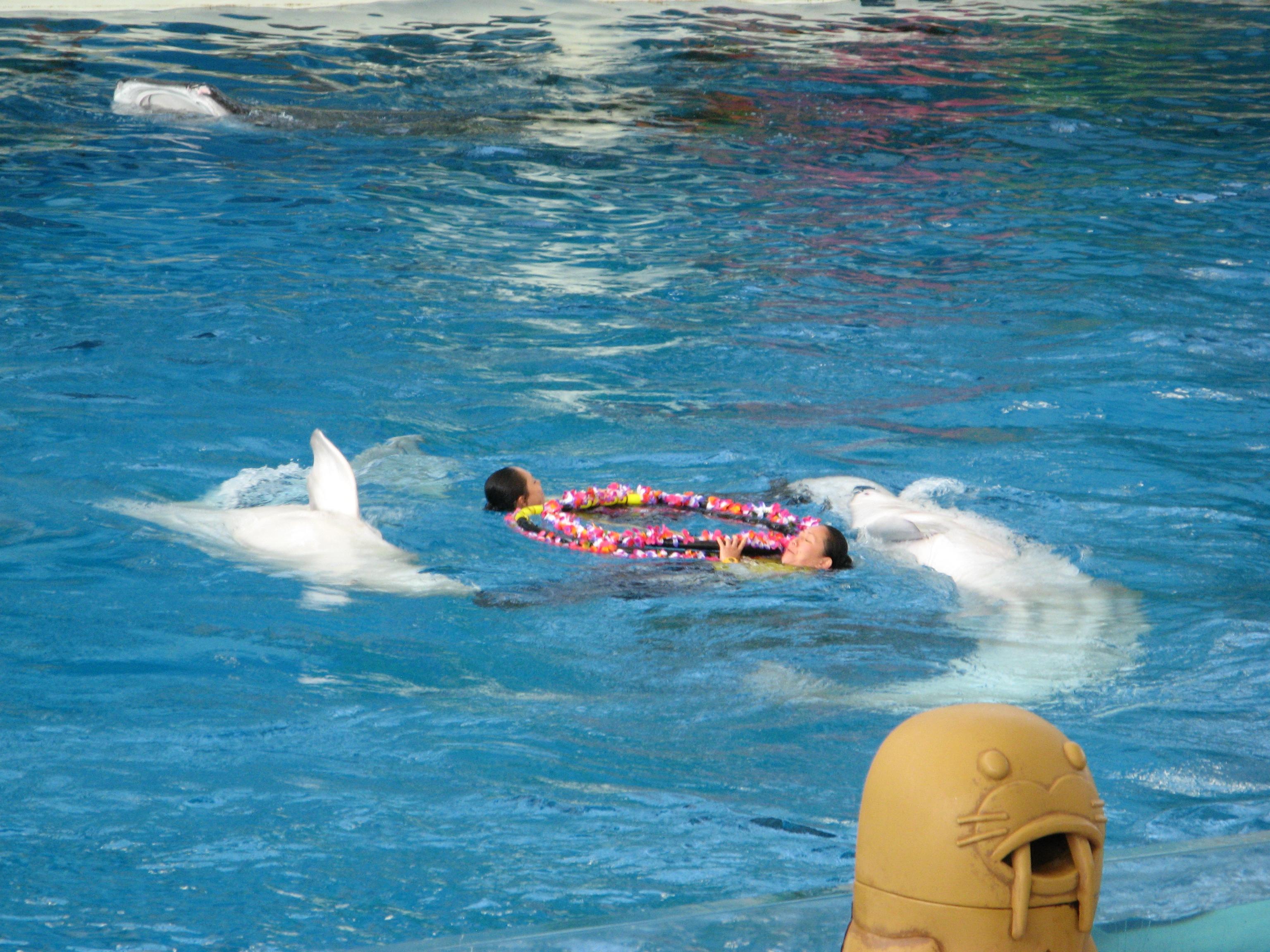 Япония. Райский остров Наккейдзима и Аква-музей океанариума / Hakkeijima Island Yokohama