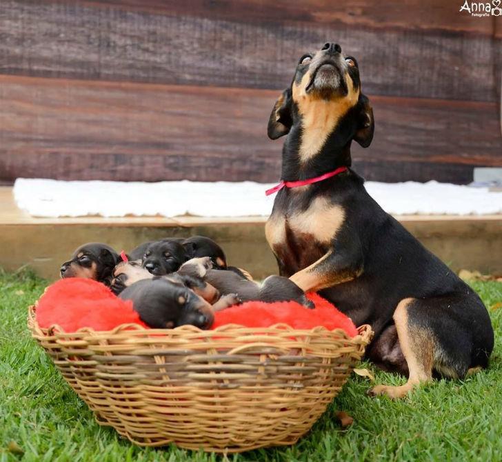 Гордая мама Лилика и ее щенки.