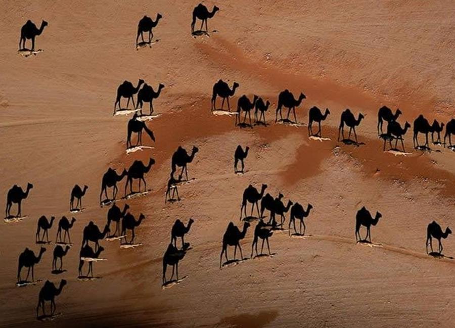 16. Игра теней. Верблюды — это белые черточки на песке
