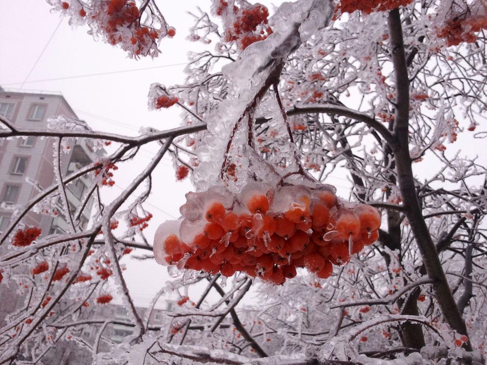 2010-12-26 13.20.58.jpg