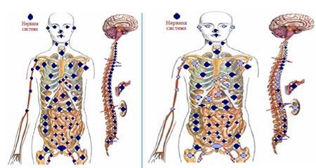 изменение функций внутренних органов с кфс