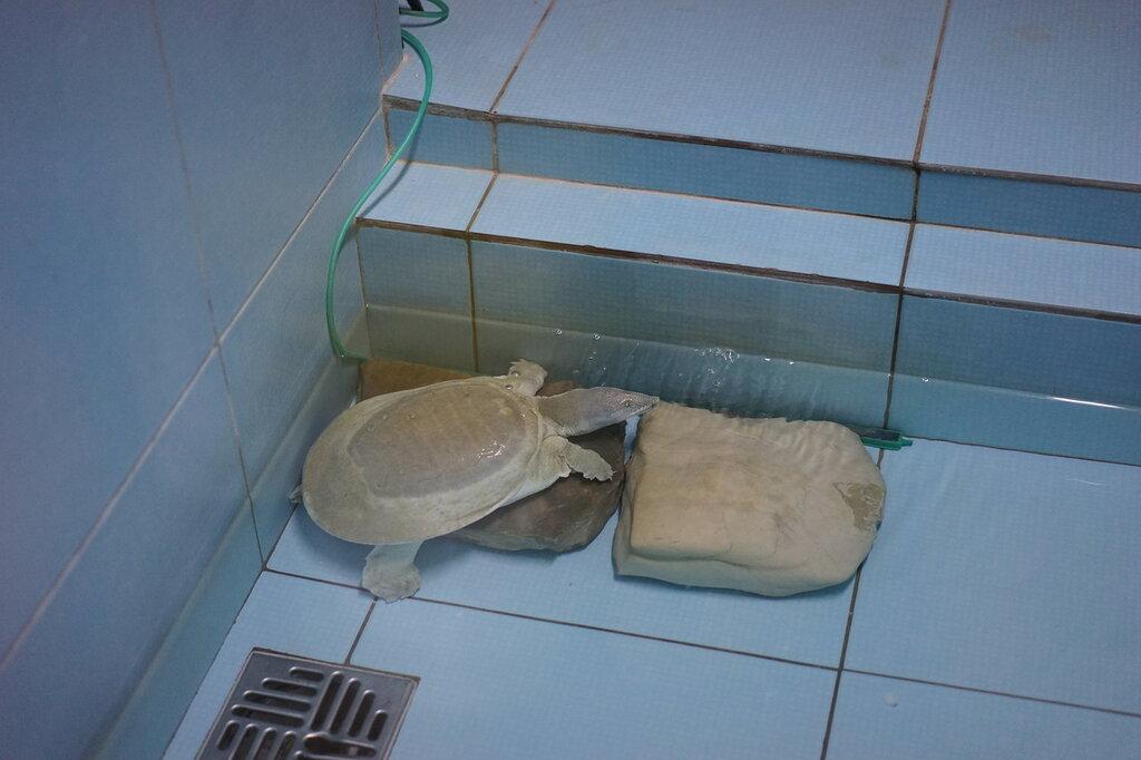 Черепаха. Террариум в Сафари-парке Геленджика