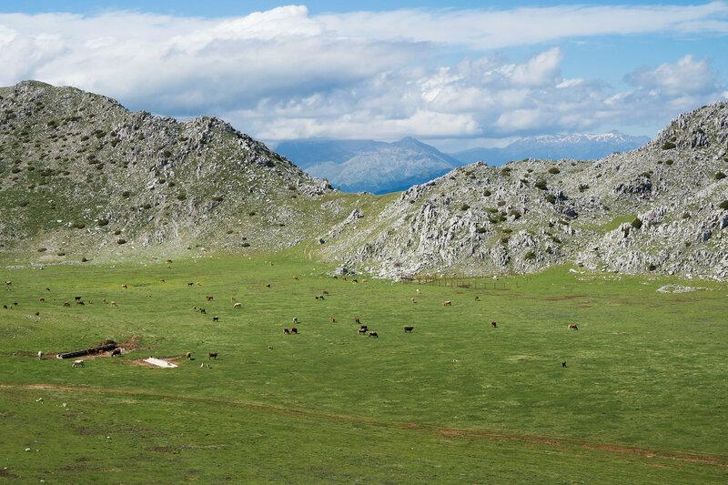 долина и стадо на горе Митсикели (Mitsikeli), Загория, Греция