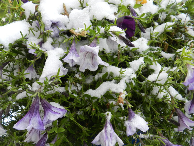 Первый снег Октября