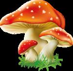грибочки (10).png