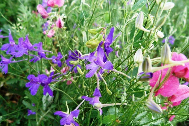 Сокирки цветы