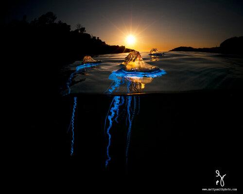 Удивительные фото над водой и под водой