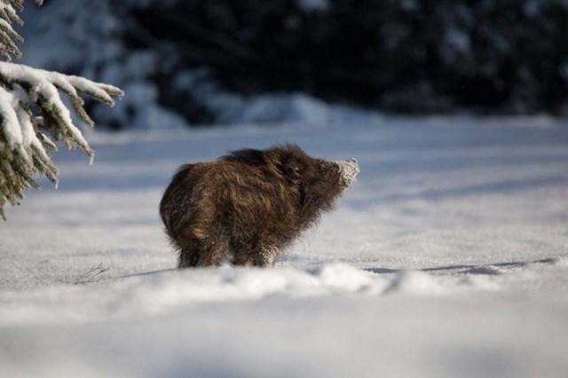 100 самых красивых зимних фотографии: пейзажи, звери и вообще 0 10f5c7 34750222 orig