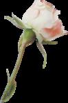valentina_purecreativity_el37.png