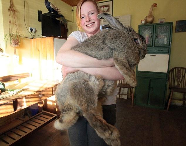 rabbit05