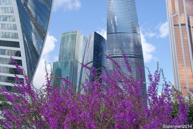 Мегаполис где цветы