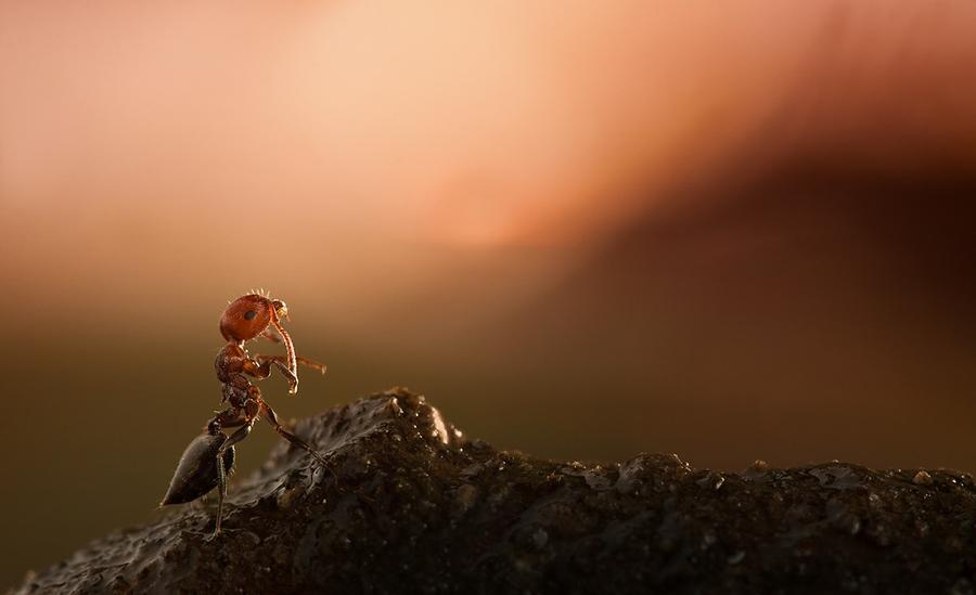 Красивейшее макро. Фотограф IRYNA