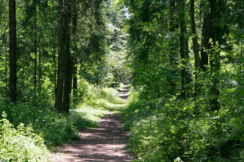 Абрамцево, дорожка в лесу