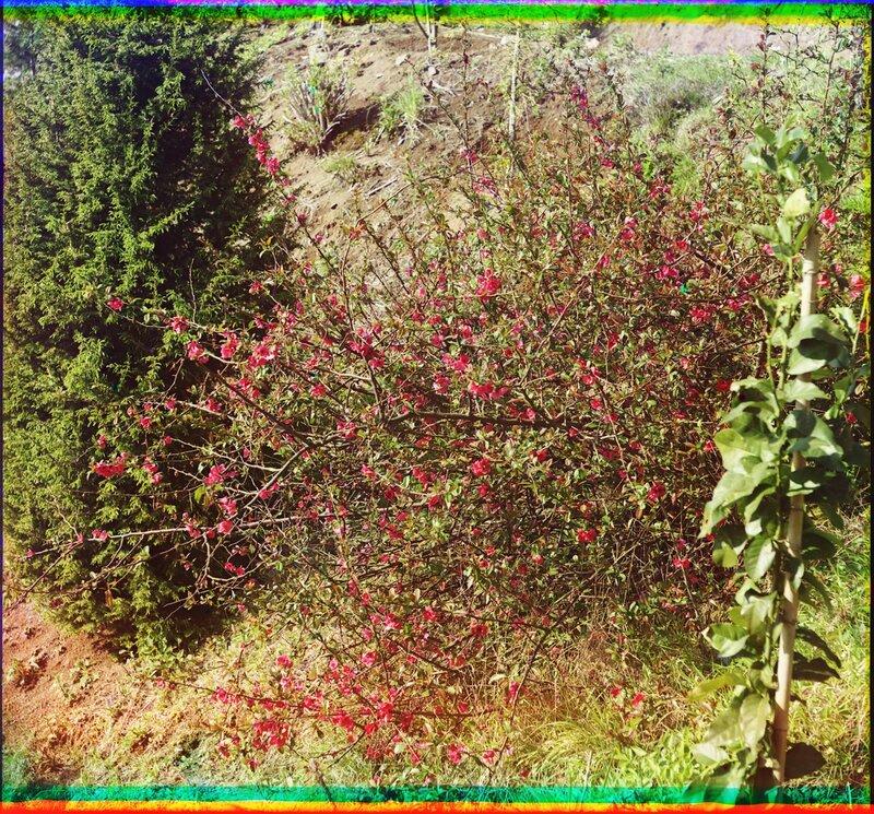 Мугань Цветущее растение 21615u.JPG