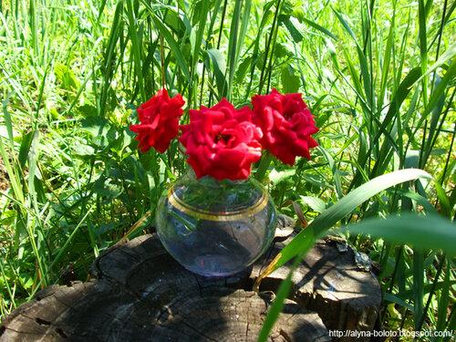 Розы на пне