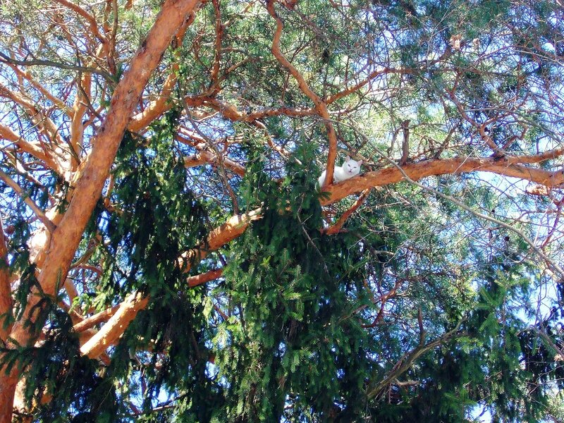Котяра на дереве