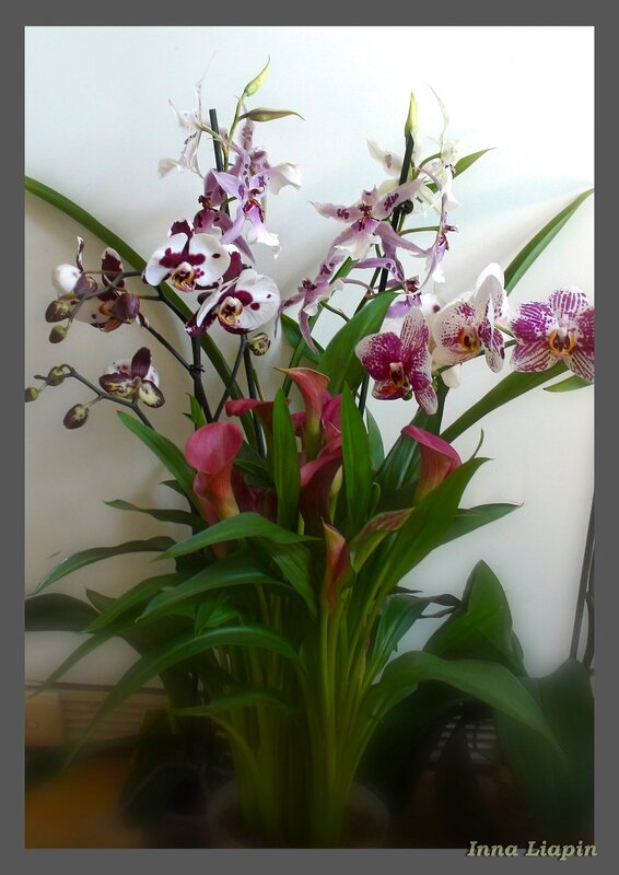 Калла и орхидеи