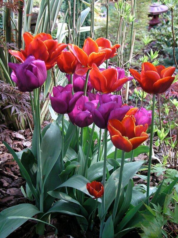 Английский сад для всех сезонов весна