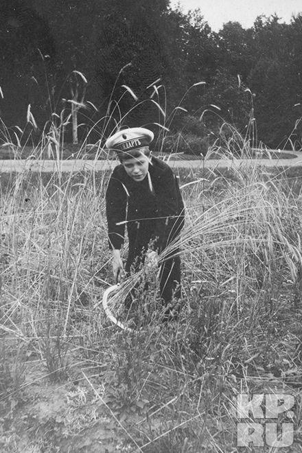 Цесаревич Алексей с серпом 1914-ый год