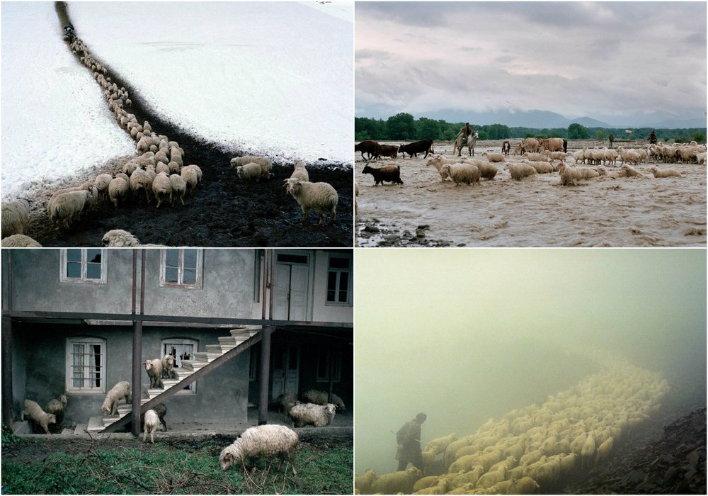 Фотограф Дмитрий Гомберг: «Путь пастуха»