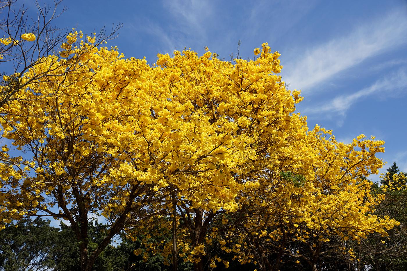 Деревья / фото Vinicius Monsores de Abreu