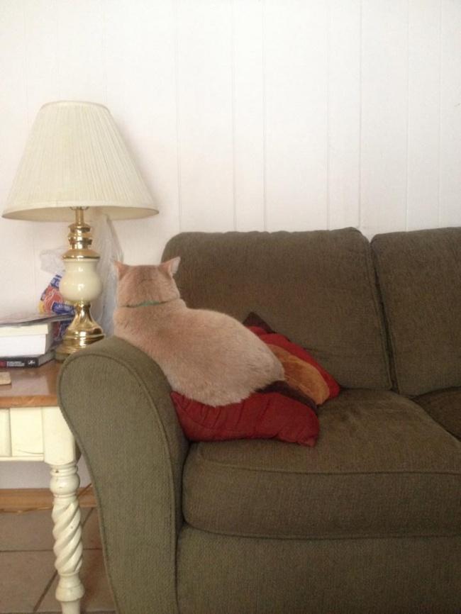 © imgur.com  Невозражайте, если кошка предложит вам навремя поменяться кроватями