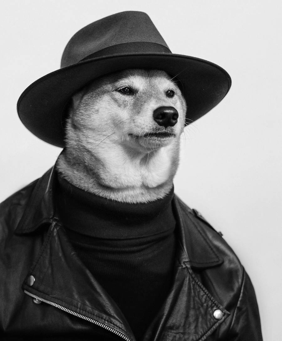 Funny and Elegant Dog Dressed as a Man
