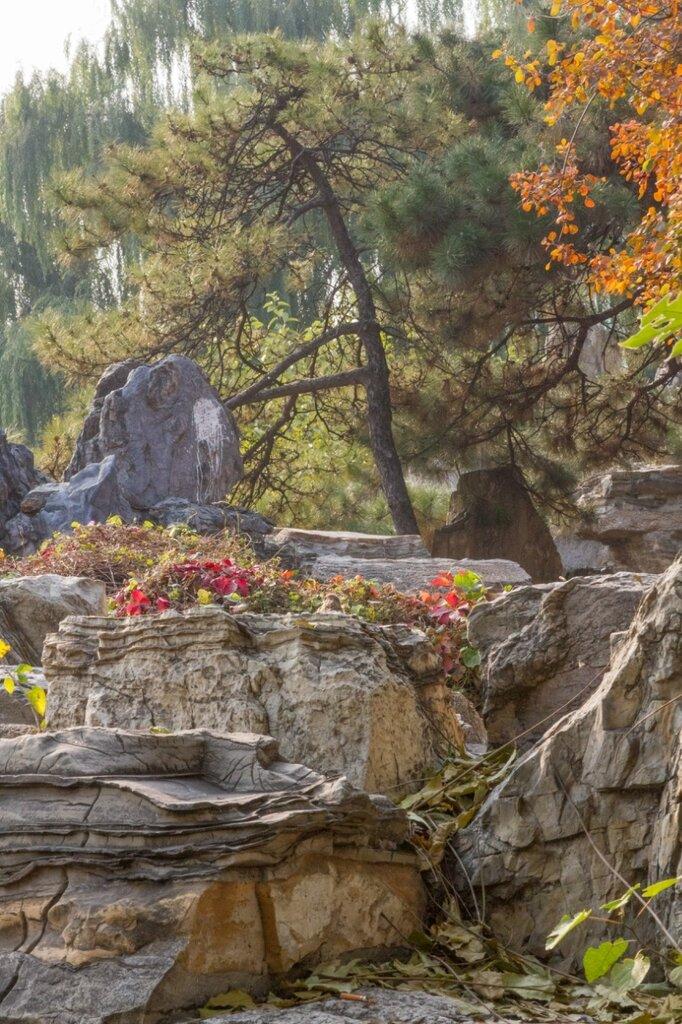 Сосна, цветы и камни