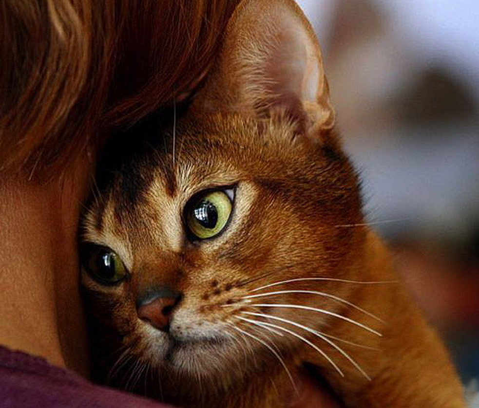 Простая история про котов