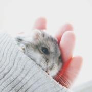 Маленький хомяк