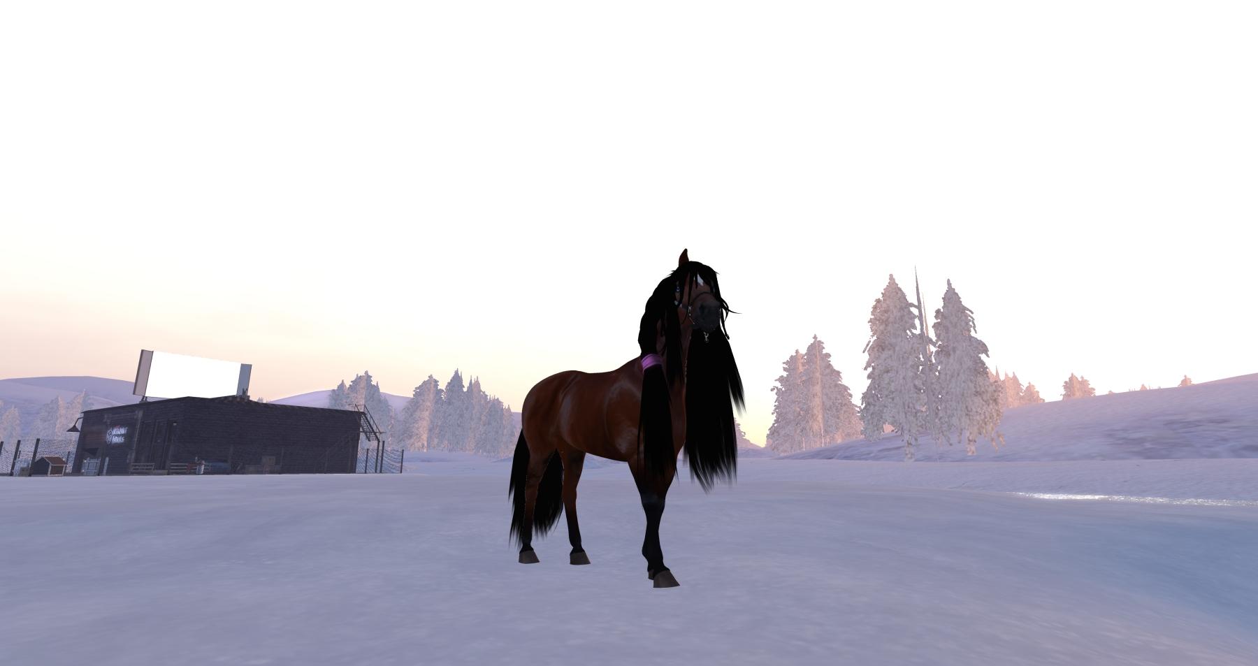 horseavatar4